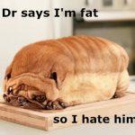 Ожирение животных