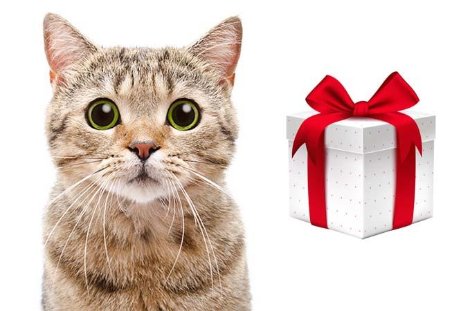 Подготовьте своего Питомца к Лету и получите от Нас Подарок!