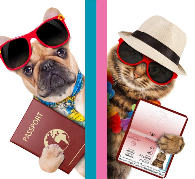 Новая услуга. Оформление документов для выезда животного за границу