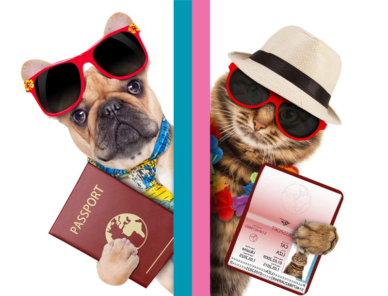 Нова послуга. Оформлення документів для виїзду тварини за кордон