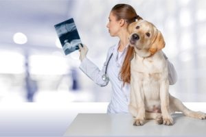 Диагностические процедуры и анализы ВетКлиника Инновет