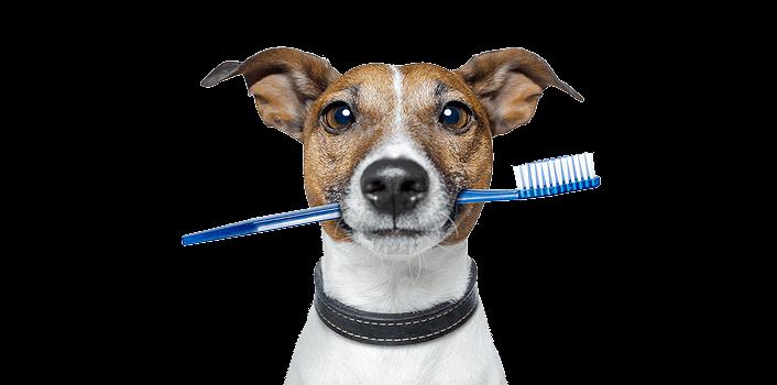 Стоматологические процедуры Котам Собакам