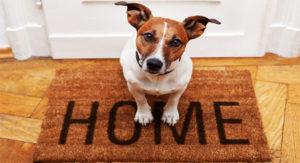 Заказать вызов ветеринара на дом.